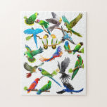 The Parrot Lovers Puzzle