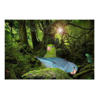The Parrotlet Jungle Poster Photography Birds