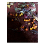The Pasion OF Fall Postcard