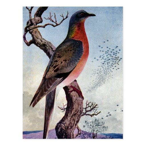 The Passenger Pigeon Postcard