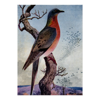 The Passenger Pigeon Poster