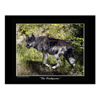 """""""The Pathfinder"""" Grey Wolf Post Card"""