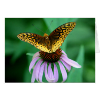 """The Patient One"" Butterfly Photography Card"