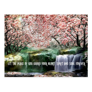 The Peace Cherry Blossom Post Cards