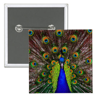 The Peacock Pins