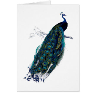 The Peacock Collection Card