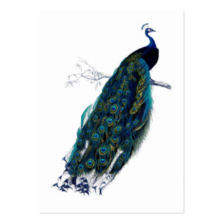 The Peacock Collection Gift Tag Large Business Card
