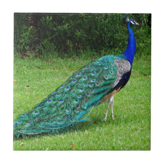 The Peacock Dance Tile
