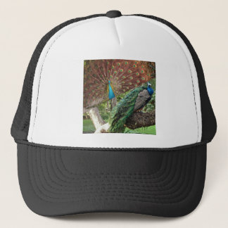 The peacock opens its tail and nature rejoices trucker hat