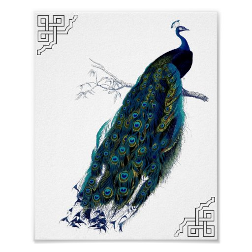 The Peacock Print