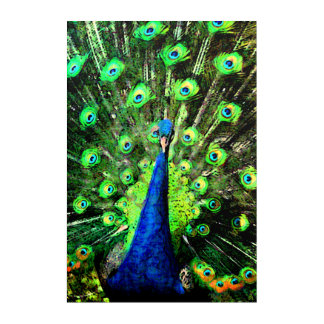 The Peacock Strut - Up Close and Personal Acrylic Wall Art