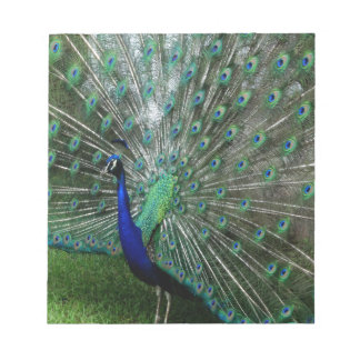The Peafowl Dance Notepad