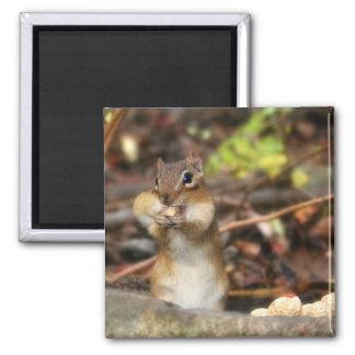 The Peanut Fiend 2 Inch Square Magnet