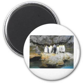 The Penguin Story Fridge Magnets