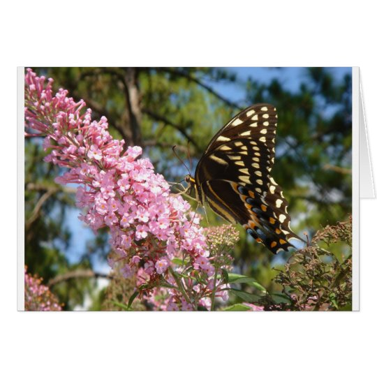 The Perfect Butterfly! Card