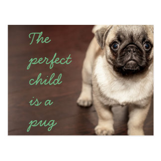 The perfect child  is a pug postcard