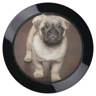 The perfect child  is a pug USB charging station