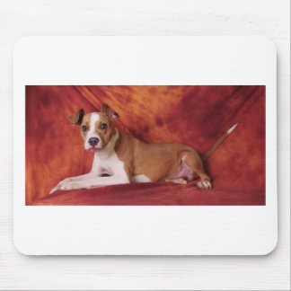 The perfect Pit Bull pose Mouse Pads