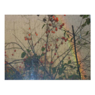 The Persimmons And The Rainbow Postcard