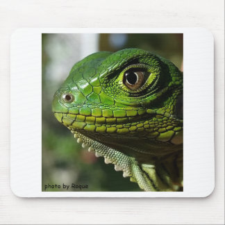 the photo of the iguana mouse pad