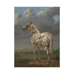 The Piebald canvas picture