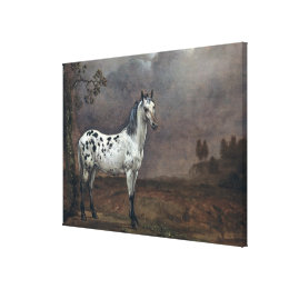The Piebald Horse, 1653 Canvas Print