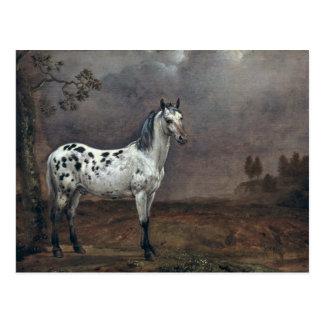 The Piebald Horse, 1653 Postcard