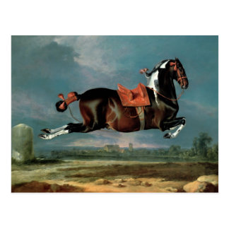 The piebald horse 'Cehero' rearing Postcard
