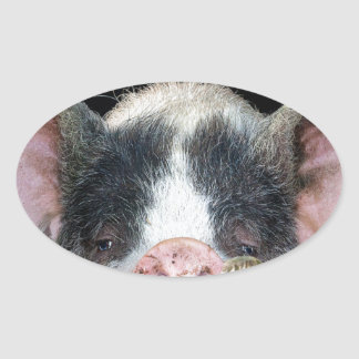 The Pig Oval Sticker