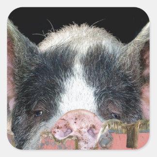 The Pig Square Sticker