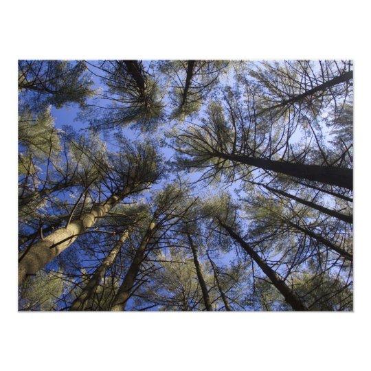 The Pine Barrens – Scenic NJ Photo Print