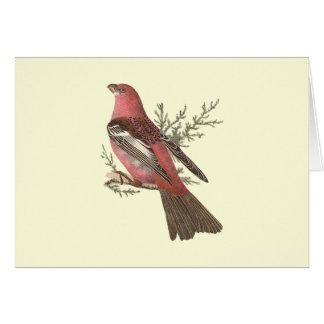 The Pine Bulfinch(Corythus enucleator) Greeting Card