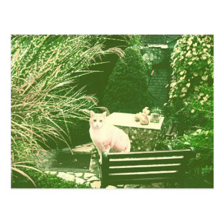 The pink cat postcard