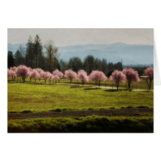 The Pink Glow of Plum Trees Card