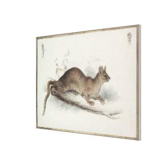The Polecat, 19th century Canvas Print