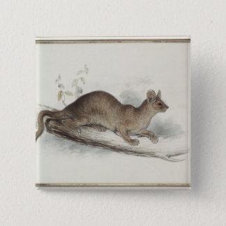 The Polecat, 19th century Pinback Button