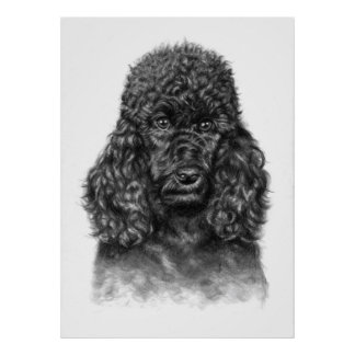 The poodle - The Poodle Poster