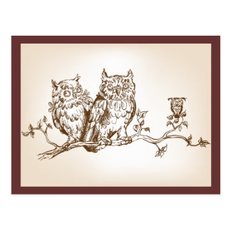 The postcard with three funny owls picture