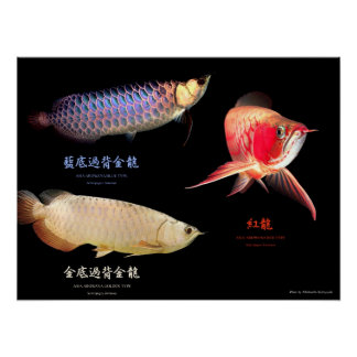 The poster of 3 Types of Asian Arowana