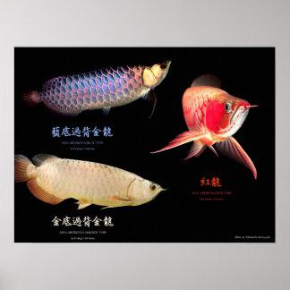 The poster of 3 Types of Asian Arowana