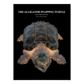 The poster of Alligator snapping turtle