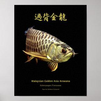 "The poster of Asian Arowana ""Golden Type"""