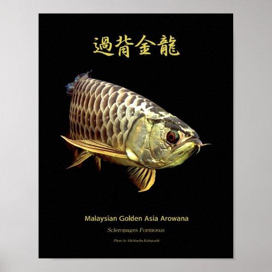"The poster of Asian Arowana ""Golden Type"" | Zazzle.com"