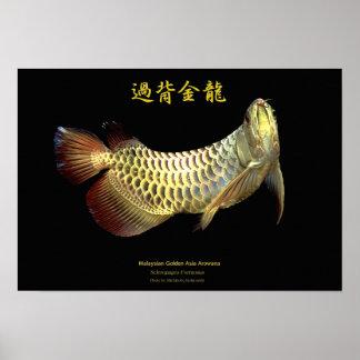 "The poster of Asian Arowana ""Golden Type"", No.02"