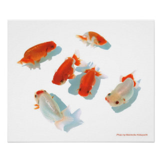 The poster of Ranchu
