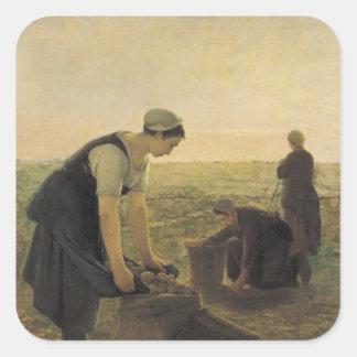 The Potato Harvest Square Sticker