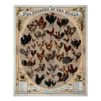 The poultry of the world poster