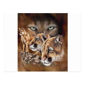 The Pouncing Cougars Postcard