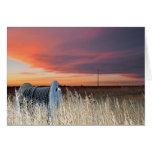 The Prairie Greeting Cards
