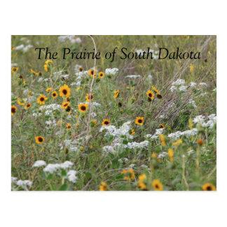 The Prairie of South Dakota Postcard